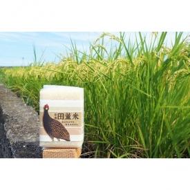 台南11號米磚囍米